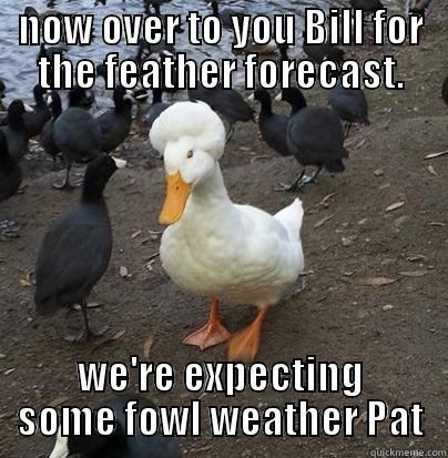 meme - Bird - now over to yOu Bill for the feather forecast. we're expecting SOme fowl weather Pat quickmeme.com