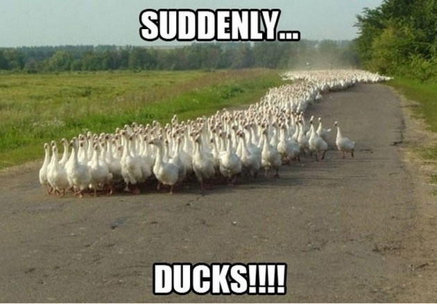 meme - Soil - SUDDENLY... DUCKS!!!!