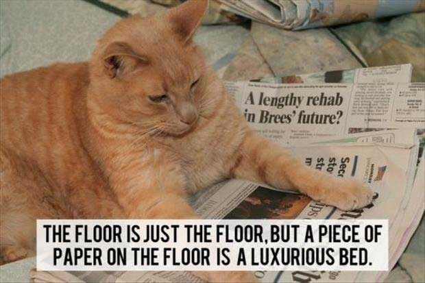 philosophical - Cat - A lengthy rehab in Brees' future? THE FLOOR IS JUST THE FLOOR,BUT A PIECE OF PAPER ON THE FLOOR IS A LUXURIOUS BED. MONDAY cane ps