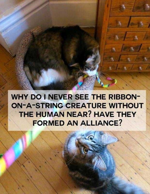 philosophical - Cat - WHY DO I NEVER SEE THE RIBBON- ON-A-STRING CREATURE WITHOUT THE HUMAN NEAR? HAVE THEY FORMED AN ALLIANCE?