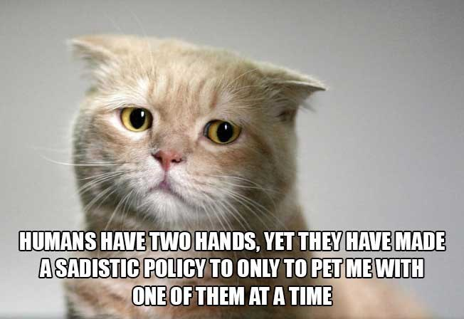 philosophical - Cat - HUMANS HAVE TWO HANDS, YET THEY HAVE MADE ASADISTIC POLICY TO ONLY TO PETMEWITH ONE OF THEM ATATIME