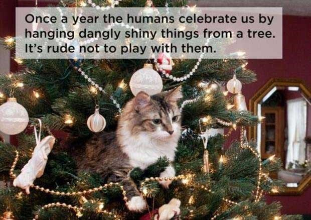 philosophical - Christmas - Once a year the humans celebrate us by hanging dangly shiny things from a tree. It's rude not to play with them.