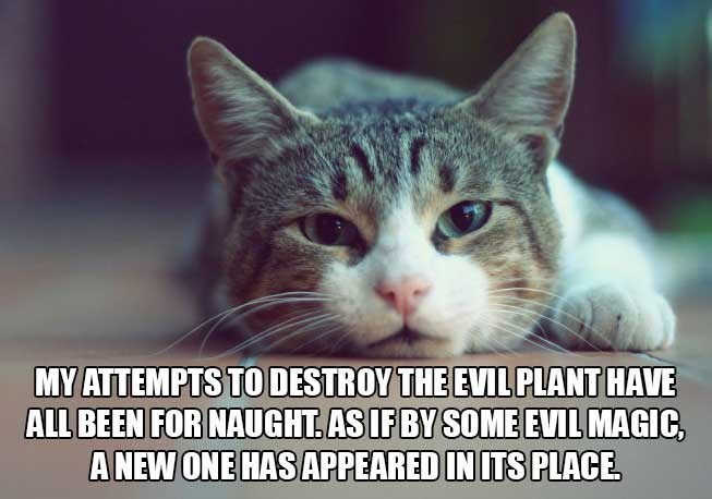 philosophical - Cat - MY ATTEMPTS TO DESTROY THE EVIL PLANT HAVE ALL BEEN FOR NAUGHT AS IF BY SOME EVIL MAGIC, ANEW ONE HAS APPEARED IN ITS PLACE