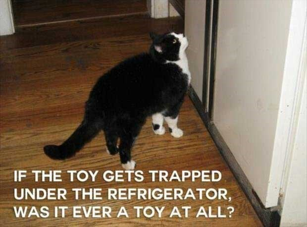 philosophical - Cat - IF THE TOY GETS TRAPPED UNDER THE REFRIGERATOR, WAS IT EVERA TOY AT ALL?