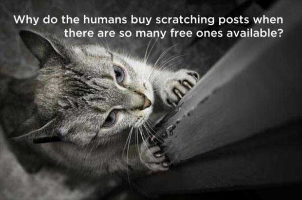 philosophical - Cat - Why do the humans buy scratching posts when there are so many free ones available?