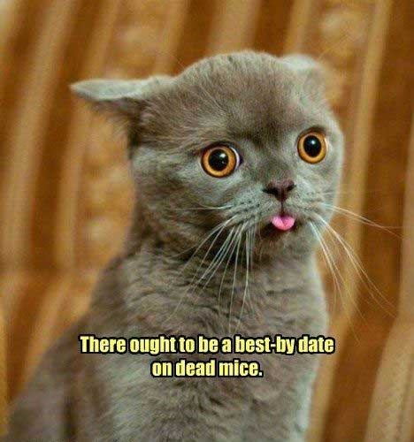 philosophical - Cat - There ought to beabest-by date on dead mice.