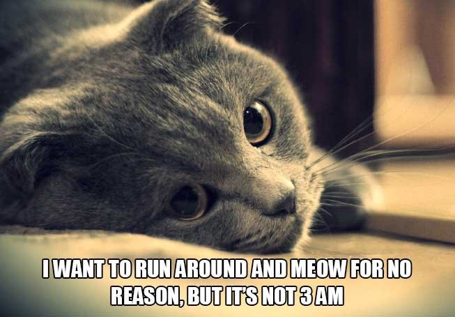 philosophical - Cat - OWANT TO RUN AROUND AND MEOW FOR NO REASON, BUT ITS NOT 3AM
