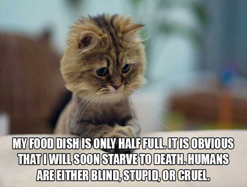 philosophical - Cat - MY FOOD DISH IS ONLY HALF FULL ITISOBVIOUS THATIWILL SOON STARVE TO DEATH.HUMANS ARE EITHER BLIND,STUPID, OR CRUEL