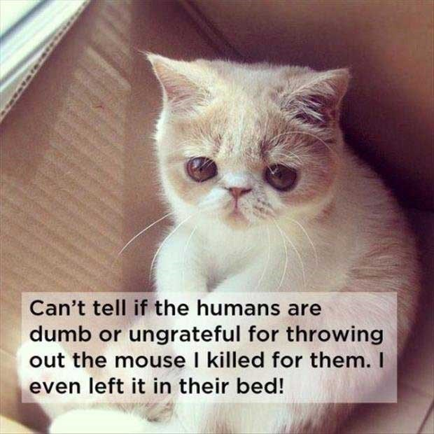 philosophical - Cat - Can't tell if the humans are dumb or ungrateful for throwing out the mouse I killed for them. I even left it in their bed!