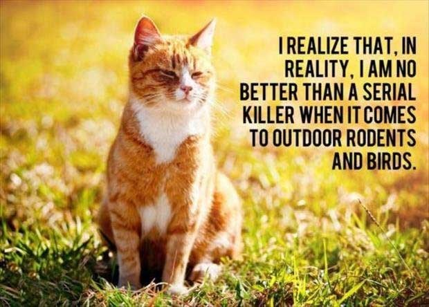 philosophical - Cat - IREALIZE THAT, IN REALITY, IΑΜ ΝΟ BETTER THAN A SERIAL KILLER WHEN IT COMES TO OUTDOOR RODENTS AND BIRDS
