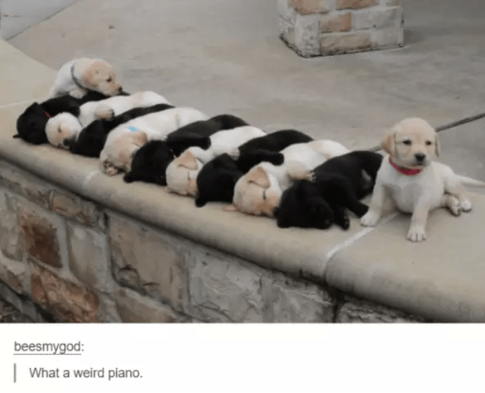 Dog - beesmygod: What a weird piano