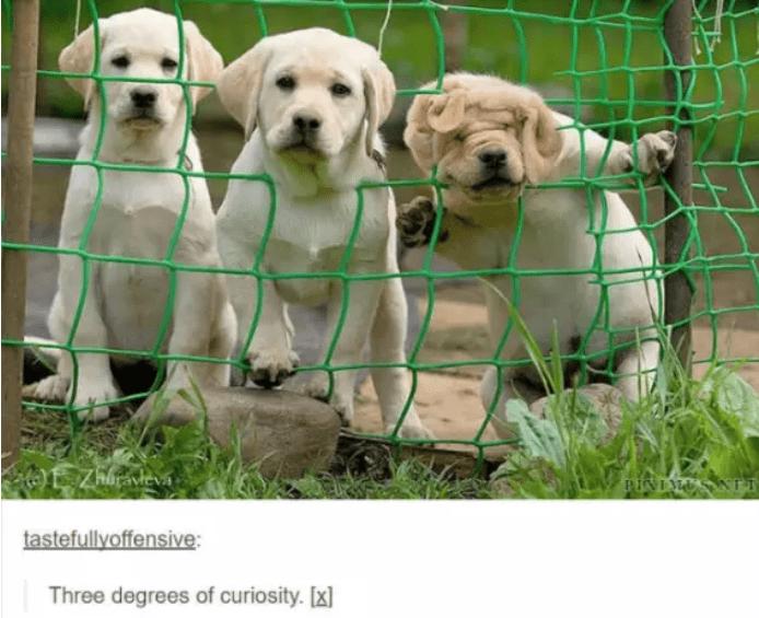 Dog - Zhhrávtevs PINLMA tastefullyoffensive: Three degrees of curiosity. [