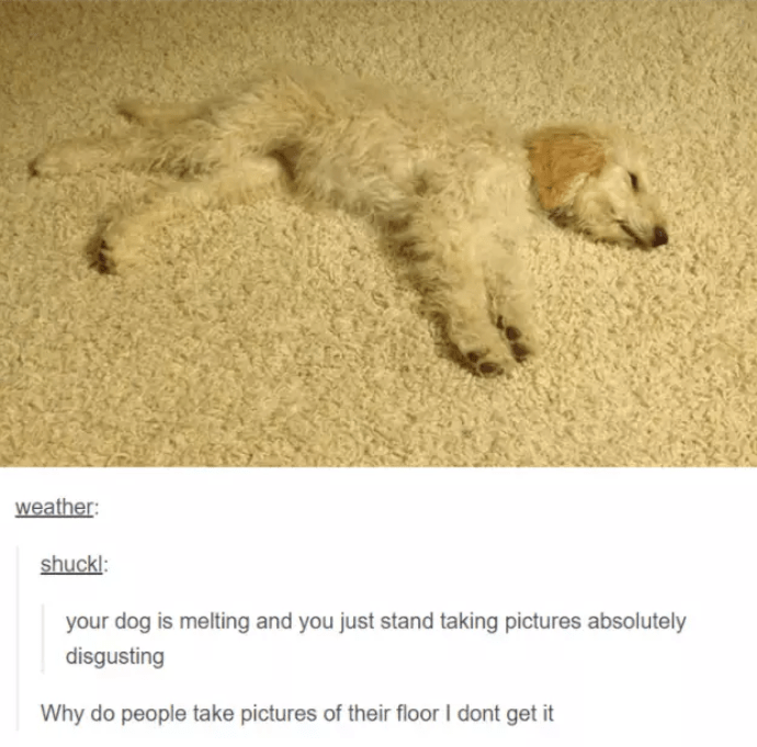 Dog - weather: shuckl: your dog is melting and you just stand taking pictures absolutely disgusting Why do people take pictures of their floor I dont get it