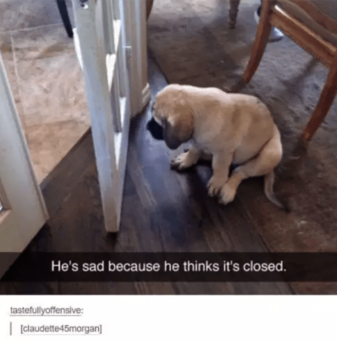 Dog - He's sad because he thinks it's closed. tastefullyoffensive: claudette45morgan]