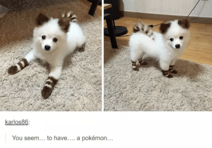 Dog - karlos86: You seem... to have.... a pokémon . ..