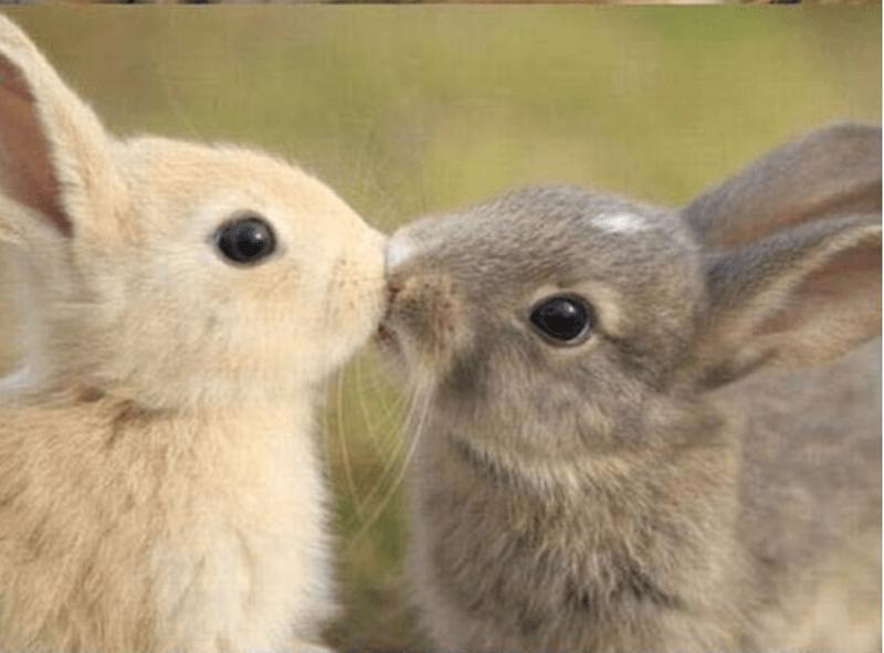 animals cuddling - Domestic rabbit