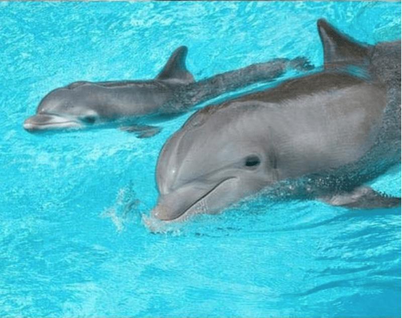 animals cuddling - Dolphin