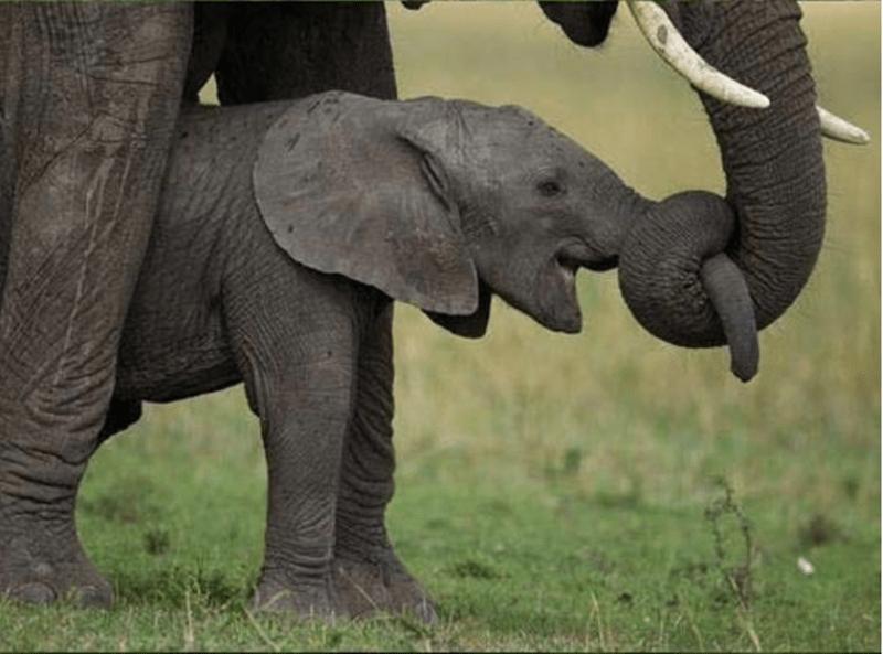 animals cuddling - Elephant