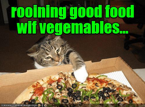 Cat - rooining good food wif vegemables.. ICANHASCHEE2EURGER cOM