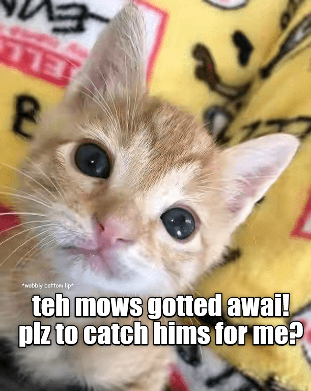 Cat - ELL wobbly bottom lip* teh mows gotted awai! piz to catch hims for me?