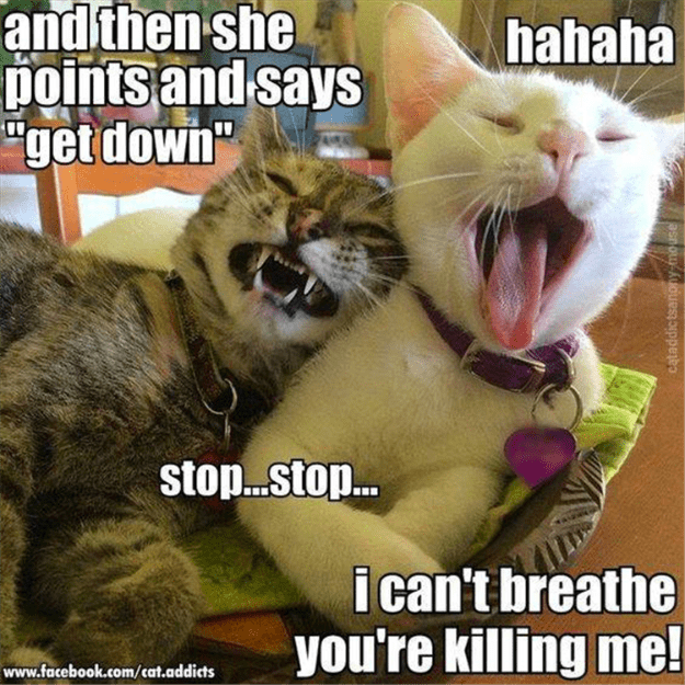 """Photo caption - and then she pointsand says """"get down"""" hahaha stop...sto... i can't breathe you're killing me! www.facebook.com/cat.addicts cataddictsanony-mo use"""