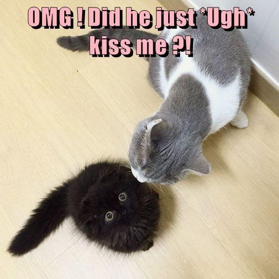 Cat - OMG!OMhe just*Ugh kiss me !!