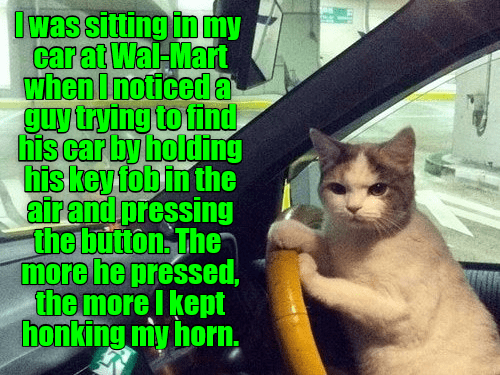 Cat - Iwas sitting in my car at Wal-Mart when Inoticed a guy trying to find his car by holding his key fob in the airand pressing the button The more he pressed the more Ikept honking my horn