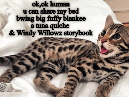 Cat - ok,ok human u can share my bed bwing big fuffy blankee a tuna quiche & Windy Willowz storybook