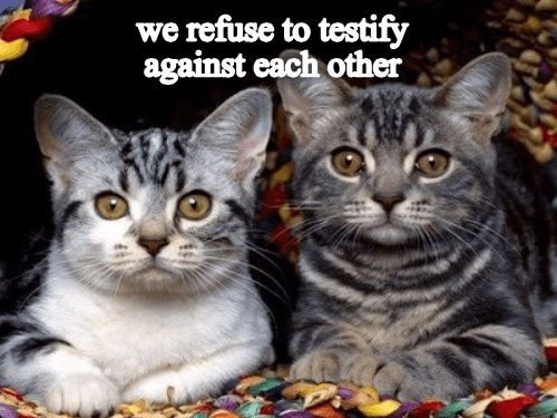 Cat - we refuse to testify against each other