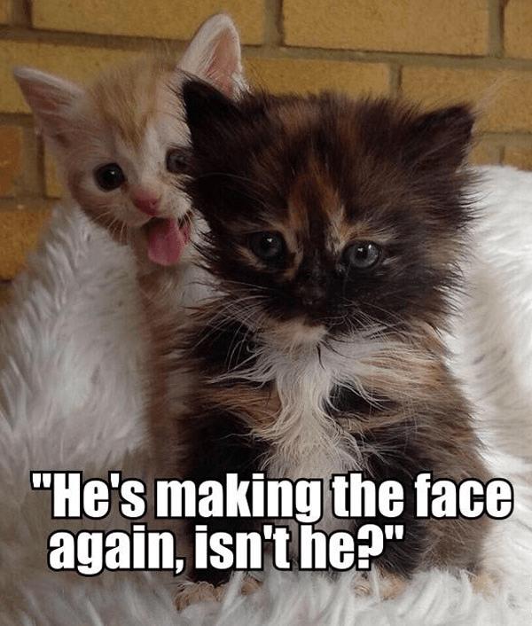 "Cat - ""He's making the face again, isn't he?"""