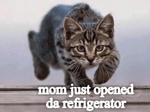 Cat - mom just opened da refrigerator