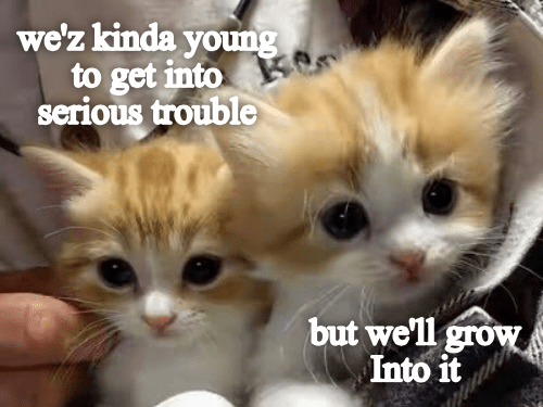 Cat - we'z kinda youg to get into serious trouble but well grow Into it