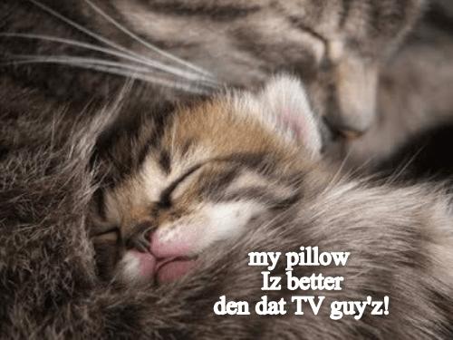 Cat - my pillow Iz better den dat TV guy'z!