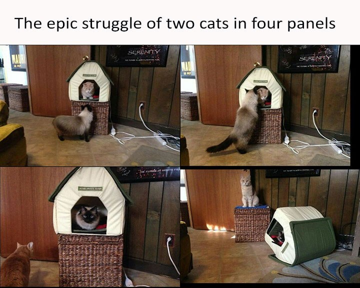 series of pics depicting cats fighting over toy bed and knocking it over