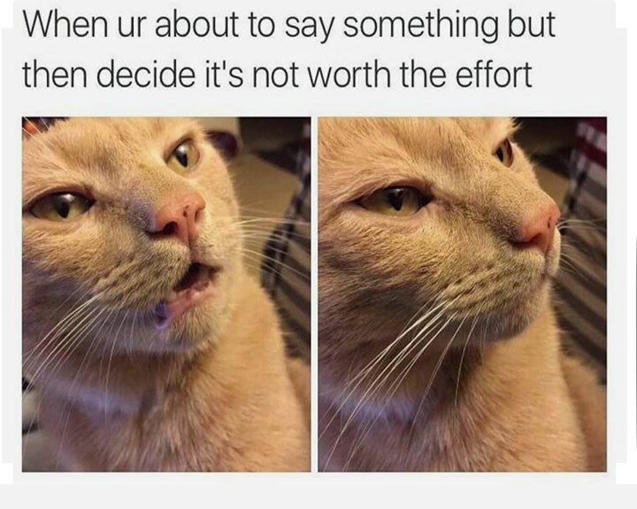 meme about holding back from talking with pics of cat closing its mouth