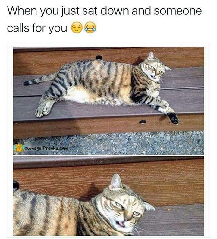 meme about being asked to come after sitting with pic of lounging cat looking exasperated
