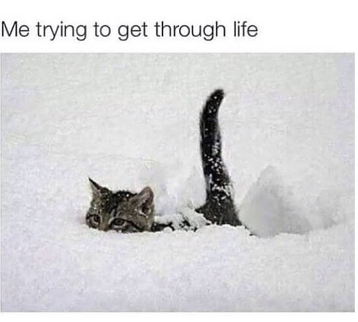 meme about trying to survive with pic of kitten struggling through snow