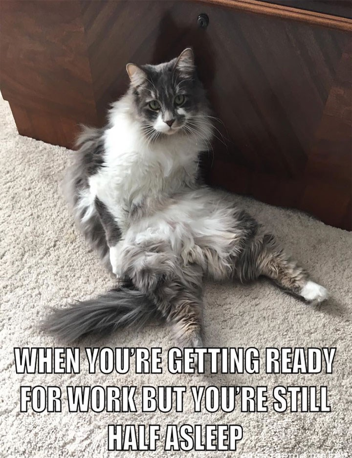 meme about being tired in the morning with pic of cat sitting on the floor
