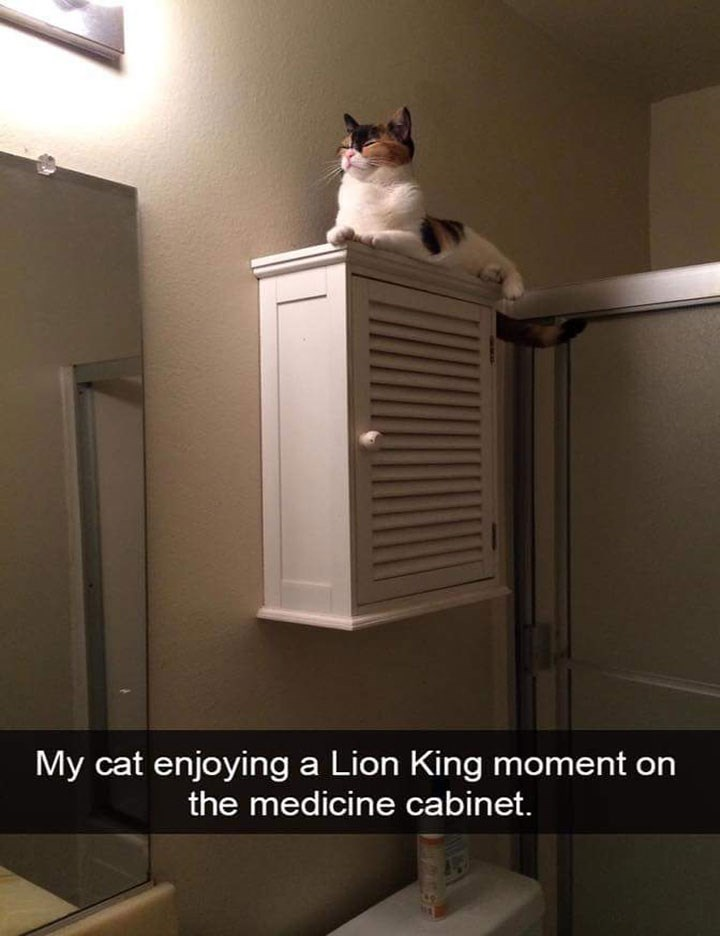 snapchat of cat sitting on top of a cabinet like on the Pride Rock from the Lion King