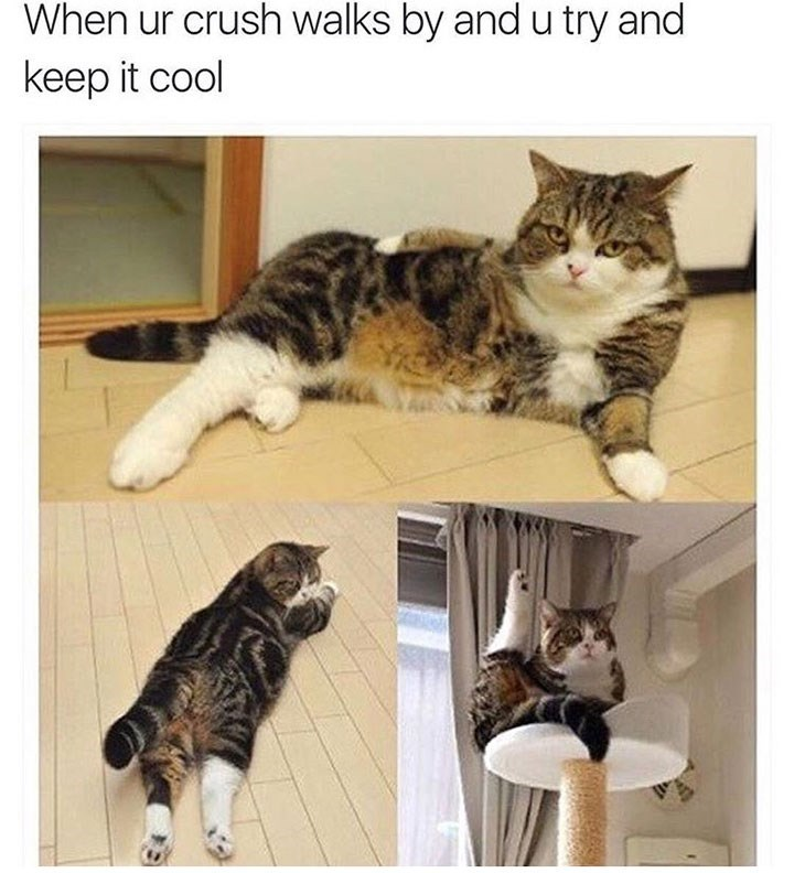meme about acting cool around your crush with pics of cat in odd poses