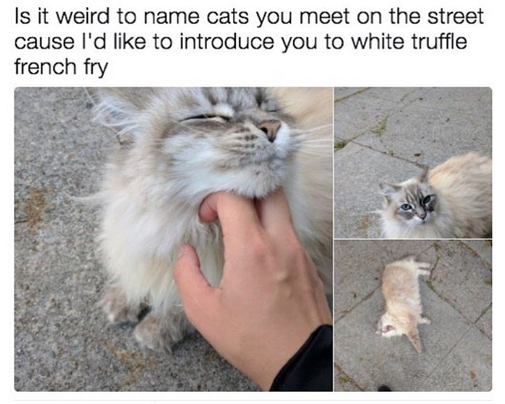 pics of adorable street cat that has been named by the poster