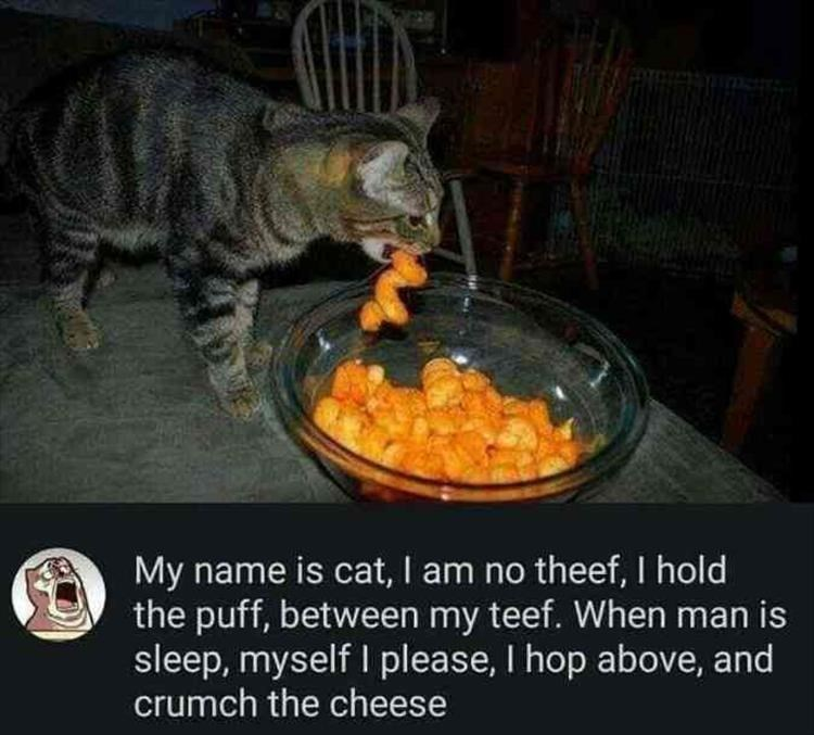 song about a cat eating Cheetos puffs