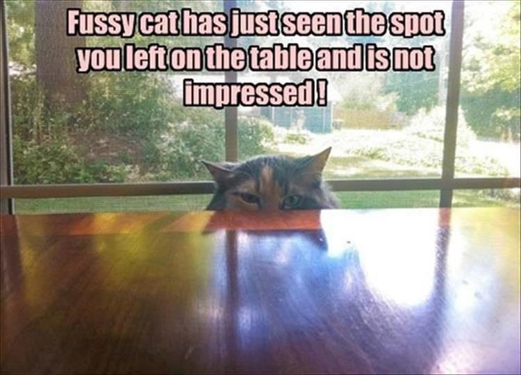 pic of cat peeking over table and judging you for not cleaning well enough