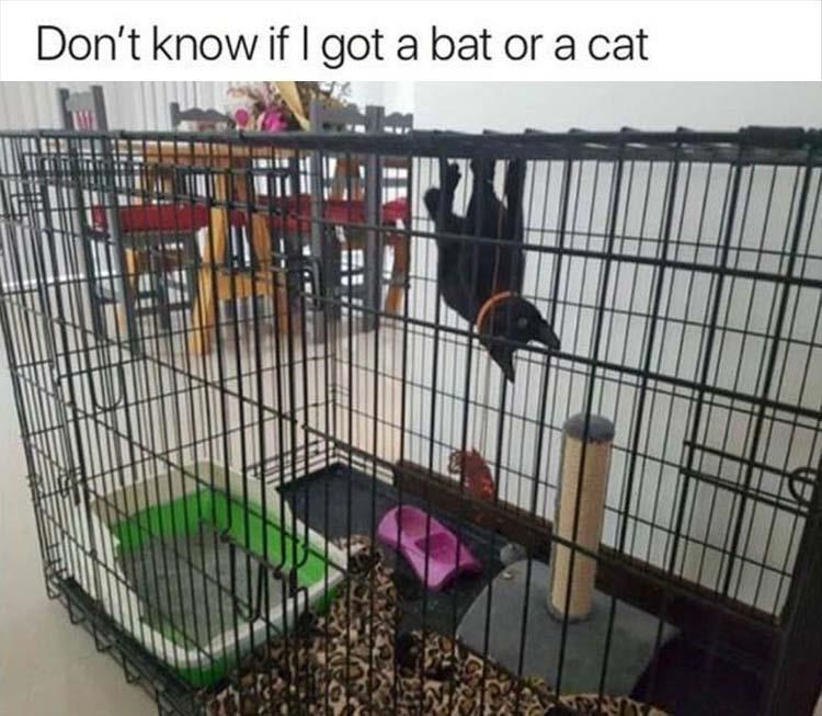 pic of black cat hanging from the roof of a cage like a bat