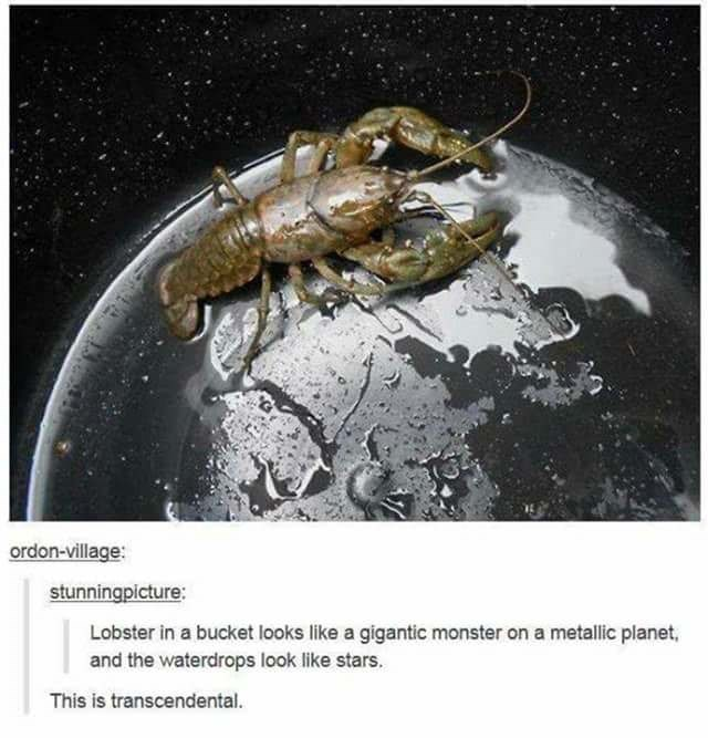 Organism - ordon-village: stunningpicture: Lobster in a bucket looks like a gigantic monster on a metallic planet, and the waterdrops look like stars. This is transcendental.
