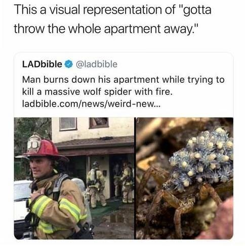 "Adaptation - This a visual representation of ""gotta throw the whole apartment away."" LADbible @ladbible Man burns down his apartment while trying to kill a massive wolf spider with fire. ladbible.com/news/weird-new..."