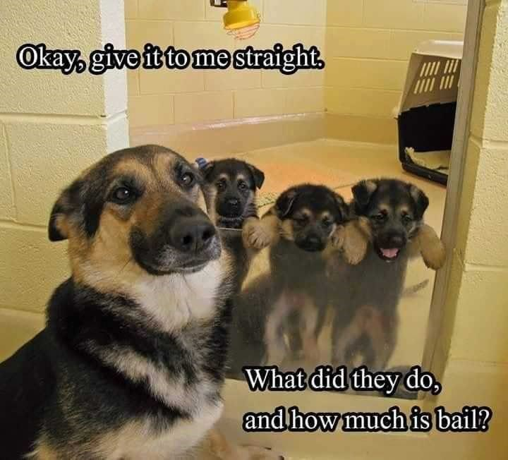 Dog breed - Okay, give it to me strafght What did they do and how much is bail?