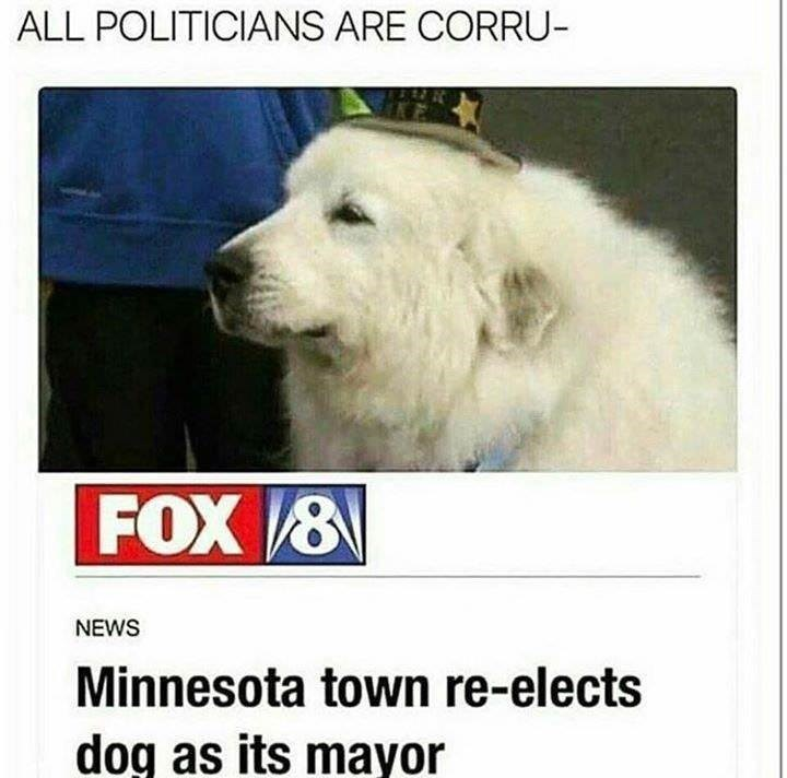 Dog - ALL POLITICIANS ARE CORRU- FOX 8 NEWS Minnesota town re-elects dog as its mayor