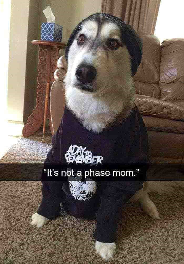 "Dog - ADAY REMEMBER ""It's not a phase mom."