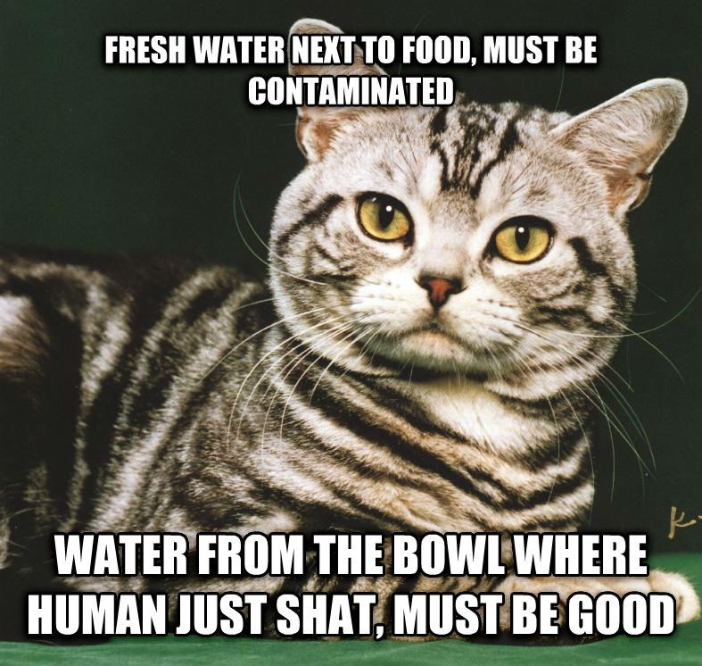 Cat - FRESH WATER NEXT TO FOOD, MUST BE CONTAMINATED WATER FROM THEBOWLWHERE HUMAN JUST SHAT, MUST BEGOOD